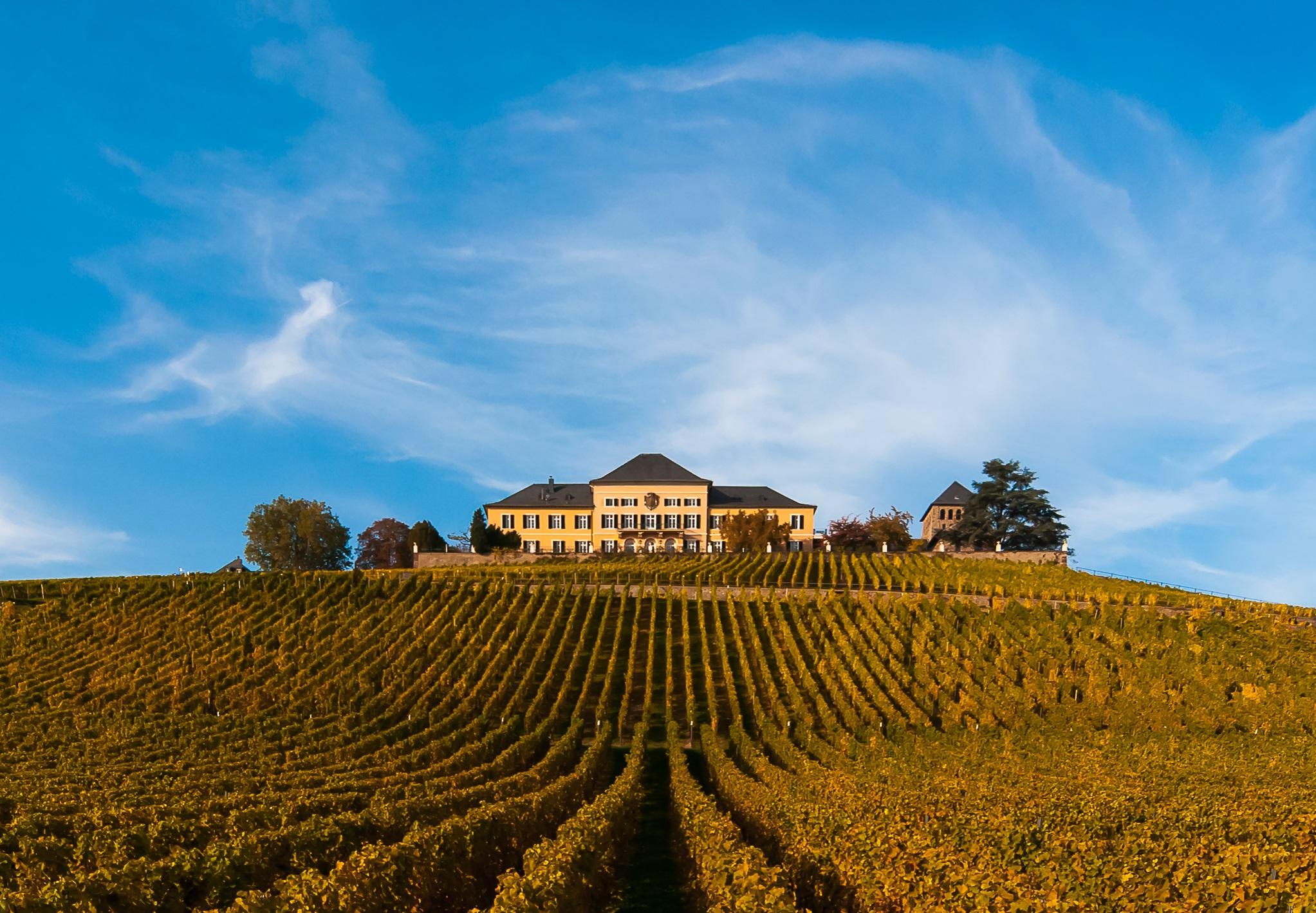 Wein & Design <br>Gin & Riesling